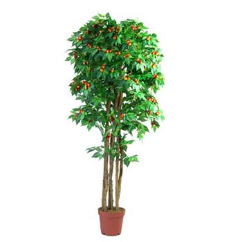【包邮】 3棵 3年 钙果苗 钙果树苗 盆栽 阳台种植 终身包成活