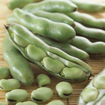 新鲜时令蔬菜农家自种蚕豆胡豆兰花豆