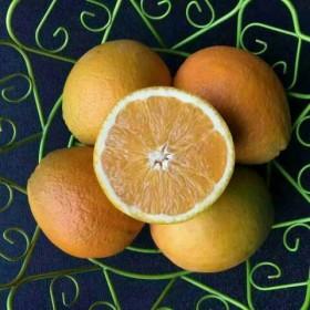 限地区农家佛乐橙5斤装新鲜水果现摘发货汁多酸甜可口