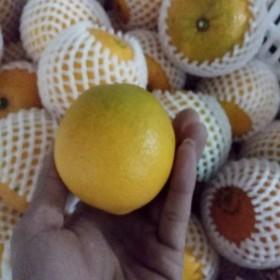 限地区农家佛乐橙3斤装新鲜水果汁多酸甜可口