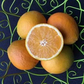 限地区农家佛乐橙3斤装新鲜水果汁多酸甜可口包邮