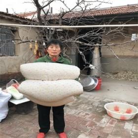 【棉花被子纯手工纯棉被芯春秋季棉絮棉被定做加厚