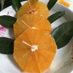 秭归冰糖橙小果超甜原生态果园直发5斤装