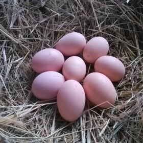 30枚绿色土鸡蛋