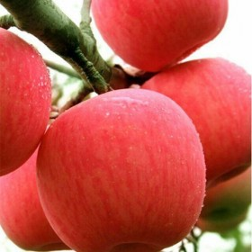 陕西高山红富士苹果10斤装85mm果子
