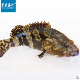 海南三亚疍家野生石斑鱼750g顺丰包邮