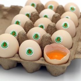 耕之语无公害 林下散养农家土鸡蛋10枚装 营养佳品