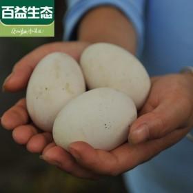 【限地区】农家散养土鹅蛋6枚装个大 去胎毒