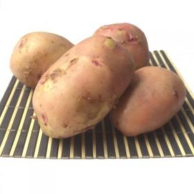 【现挖现发】5斤新鲜红皮黄心云南特产土豆洋芋马铃