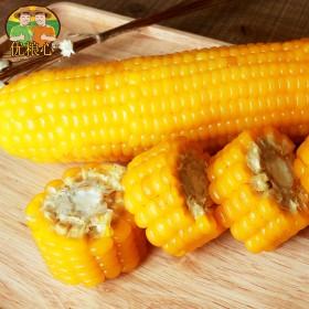 【4斤花糯甜玉米】约8根有机非转基因黄糯甜玉米