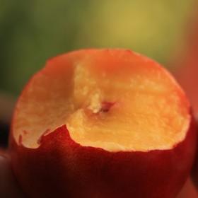 新鲜水果黄心油桃下单现摘5斤装