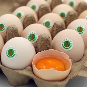 20枚装无公害 林下散养 新鲜土鸡蛋 45克/枚