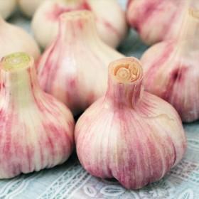 【限地区】金乡大蒜紫皮鲜蒜头调味现挖现发5斤