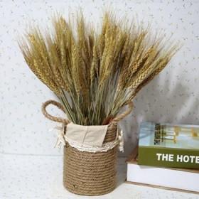 天然干麦穗干花插花