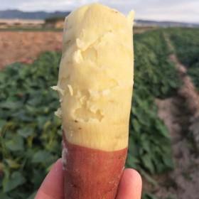 陕西农家新鲜板栗红薯地瓜番薯香薯红苕5斤包邮