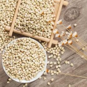 陕北山地种植荞麦米
