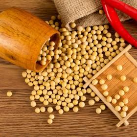 黄豆500g东北大豆非转基因大黄豆子农家自种
