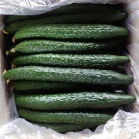 限制地区新鲜现摘有机刺黄瓜生吃绿黄瓜5斤