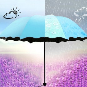 遇水开花雨伞 晴雨伞 黑胶防晒 加固