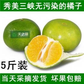 新品新鲜桔子现摘现发柑橘5斤酸甜青薄皮早熟孕妇水果