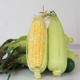 5斤云南有机新鲜水果甜玉米棒