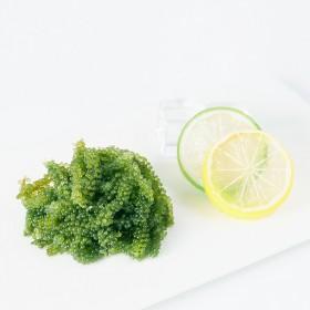 鱼臻多海葡萄即食海洋蔬菜新鲜海藻绿色鱼子100g寿