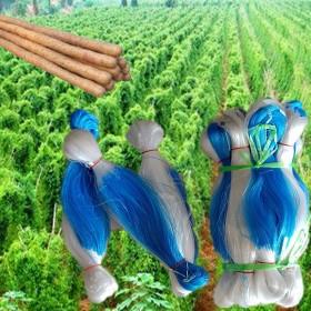 加粗植物爬藤网种植网山药黄瓜豆角瓜专用网攀爬