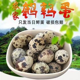 新鲜鹌鹑蛋生蛋50玫农家散养鹌鹑