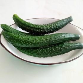 山西岚县新鲜黄瓜嫩蔬菜水果农家自种黄瓜现摘