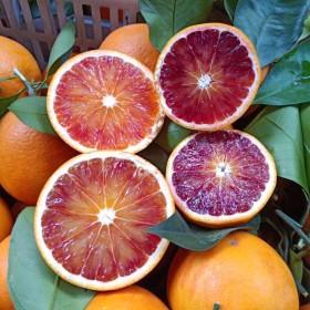 【5斤】血橙秭归脐橙红心橙子中华红橙新鲜当季水果