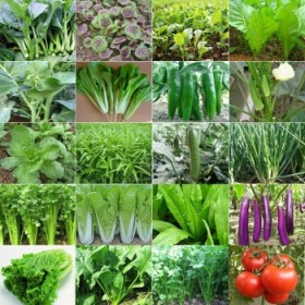 35包蔬菜种子+肥2包