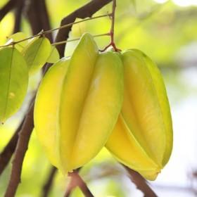 【5斤】新鲜杨桃五菱子甜杨桃新鲜水果当季水果时令果
