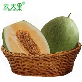 【10斤】海南哈密瓜网纹瓜西州蜜瓜新鲜水果当季水果