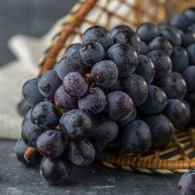 【4斤】早葡萄黑提子无籽葡萄云南黑加仑新鲜当季水果