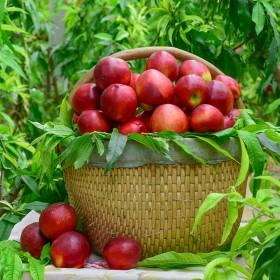 【3斤】油桃脆桃甜桃新鲜水果当季水果水蜜桃桃子脆桃