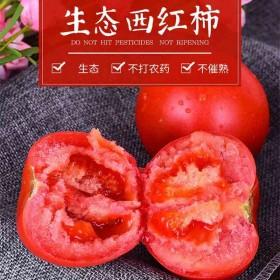 现摘现发新鲜果西红柿时令蔬菜大番茄红粉一号