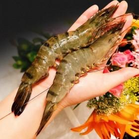 越南黑虎虾鲜活超大特大新鲜冷冻斑节虾九节虾老虎虾海