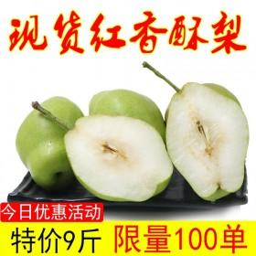 红香酥梨9斤脆甜梨子