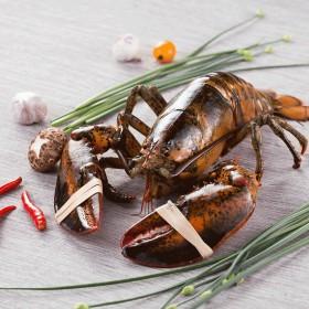 味库波士顿龙虾鲜活大2只特大波龙奥龙海鲜水产2斤