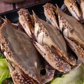 冷冻梭子蟹鲜活大母蟹红水产生螃蟹海鲜即食新鲜全膏舟