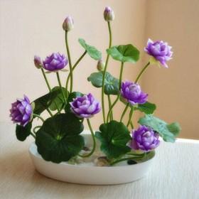 四季荷花30粒碗莲种子已开口水培植物睡莲荷花水养