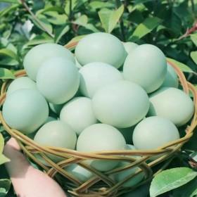 新鲜25枚散养绿壳土鸡蛋农家自产健康只限25枚