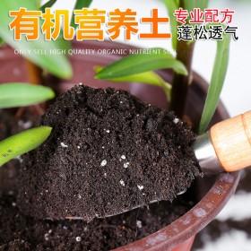 【2盆多肉套装】送2个花盆营养土