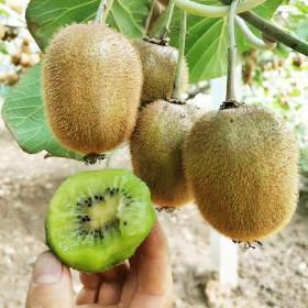 陕西徐香猕猴桃5斤中大果包邮 绿心奇异果新鲜水果