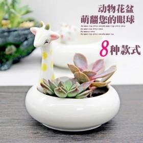 萌寵陶瓷花盆買就送多肉 多肉植物綠植組合陶瓷花盆