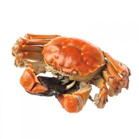 限地区固城湖大闸蟹螃蟹生鲜全母蟹