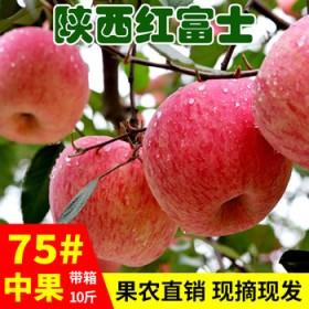 现摘苹果水果新鲜当季带箱10斤批应季脆甜陕西红富士