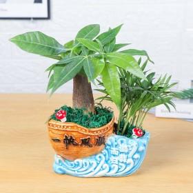 发财树客厅花卉绿植室内桌面招财吸甲醛绿色植物办