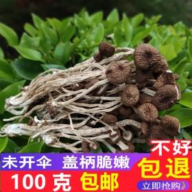 江西广昌茶树菇干货100g散装包邮不开伞农家自产