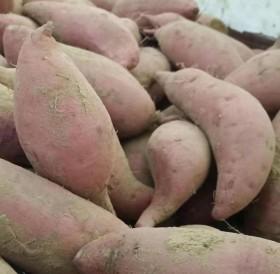 甜番薯五斤起卖五斤
